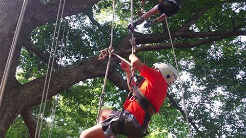Boys climbing a tree on ropes